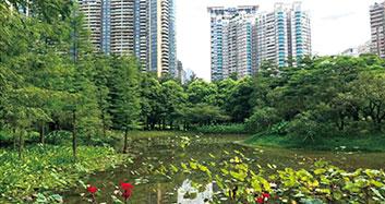 dafacasino珠江公园中心湖水生态修复